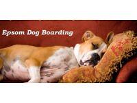 Dog Boarding in Epsom