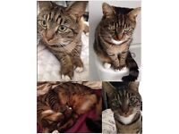 Lost Cat - Winton / Charminster