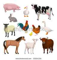 Looking to rent a petting zoo for a child's Farm birthday party