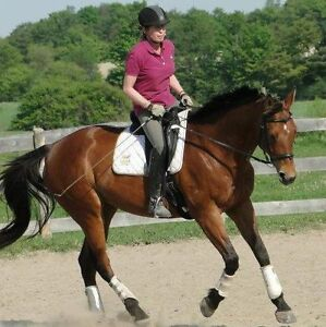 FREE LEASE/ PART BOARD NICE BIG TB MARE