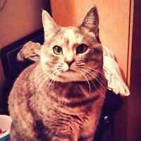 Fixed female cat