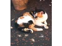 Still missing Urgent Missing cat Ballymena
