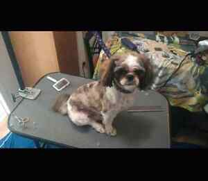Mobile pet grooming service Cambridge Kitchener Area image 9