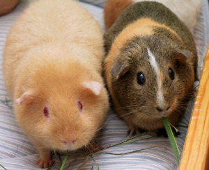 Looking to re-home unwanted small animals and reptiles!