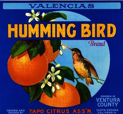 Santa Susana Humming Bird #1 Orange Citrus Fruit Crate Label Art Print