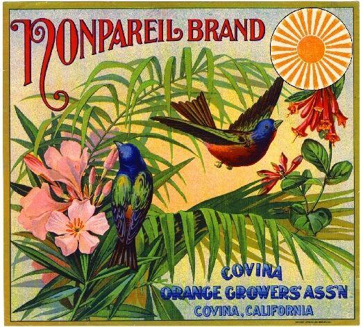Covina Nonpareil Bluebird Birds Orange Citrus Fruit Crate Label Art Print