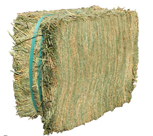 Double pressed alfalfa small bales for sale