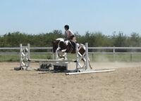 Large pony available for lease