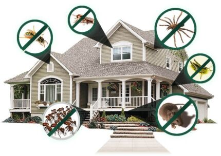 SAME DAY PEST CONTROL TREATMENT FROM $80