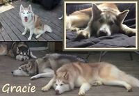 BEAUTIFUL GRACE URGENTLY NEEDS A FOSTER/FOREVER HOME