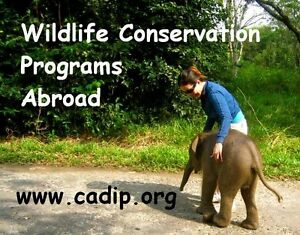 Wildlife Conservation Programs