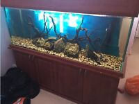 Fish tank 5ftx2ftx18inches and unit in Farnham