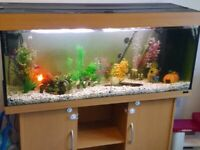 4ft fish tank with built in stand with pump and heater