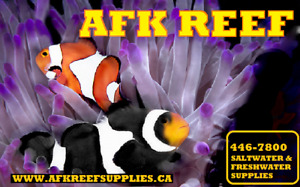 AFK REEF Hawaiian Black Aquarium Sand