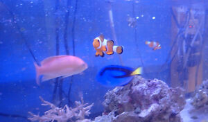 AFK Saltwater Fish & Inverts