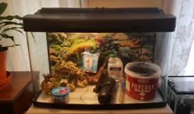 Interpet fish box 120 fish tank