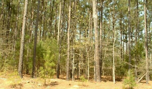 Waterfront 0.82 Acre Land for Sale in Elbert County, Georgia