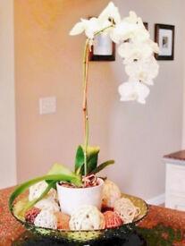 Cream Ceramic Coloured Tapered Plant Pot Vase Container[15cmx13cmx14cm].