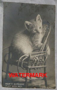 ORIG. REAL PHOTOGRAPH POSTCARD - KITTEN, ADIRONDACK CHAIR 1905