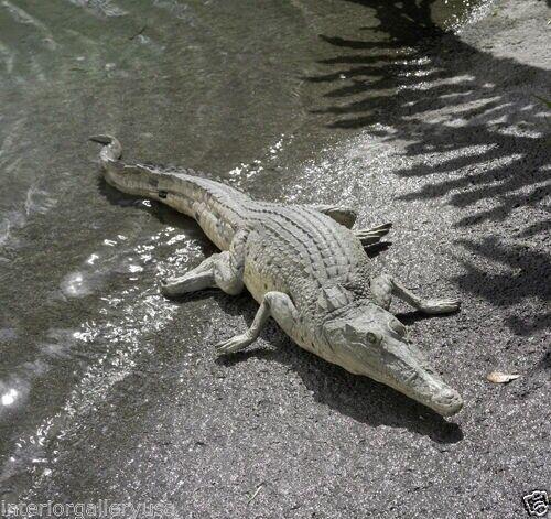 Crocodile Statue - Life Size Croc Statue - Large Crocodile Statue 4