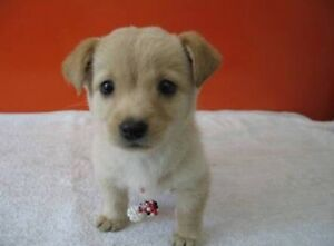 Small Breed Puppy Wanted Teralba Lake Macquarie Area Preview