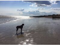 Experienced fun and friendly dog walker. Chichester, Fishbourne, Bosham.