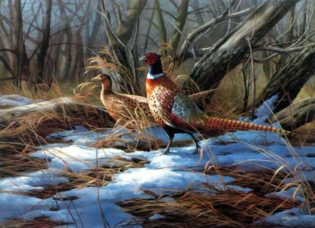 """Spring Thaw By Rosemary Millette Pheasant Print  Image 9"""" x 6.5"""""""