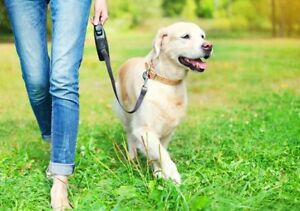 Prommeneuse de chiens- Dog walking service