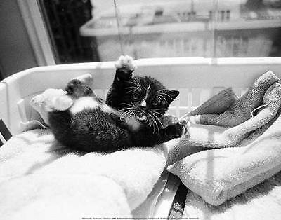 Kitten Laundry Kim Levin Art Print 14X11 Cute Black And White Fluffy Cat Poster