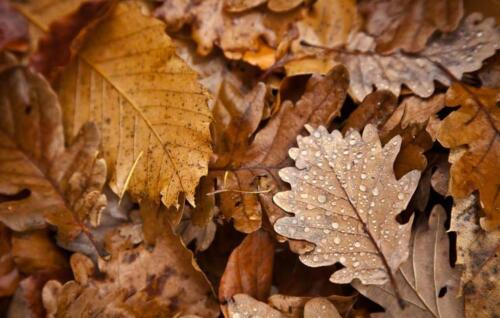 dry leaves on the street