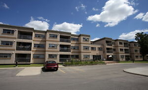 **Looking For A Clean Quiet Apartment** Kitchener / Waterloo Kitchener Area image 1