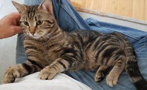 Couple de jeunes chats stérilisés recherchent une famille