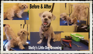 Shelly's Little Dog Grooming Regina Regina Area image 2