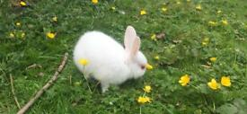 5 baby rabbits