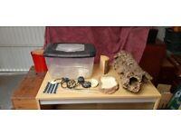 Reptile vivarium with numerous accessories.