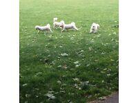 Dog Walking, Pet Sitting - Plymouth