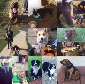 Experienced & Affordable Pet sitter / Maitland area