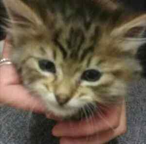Free kitten Elderslie Camden Area Preview