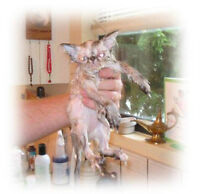 House Call Cat Grooming
