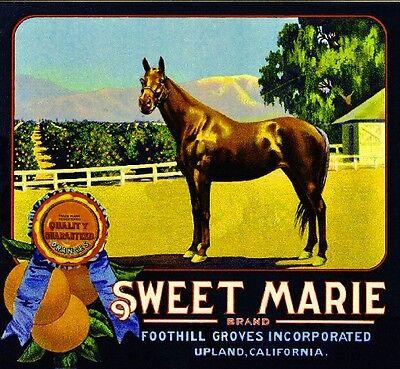 Upland Sweet Marie Horse Orange Citrus Fruit Crate Label Art Print