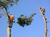 ALEN'S TREE SERVICE - %20 off month of JUNE!