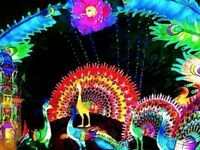 4 TICKETS The Festival of Light Southampton (Switch)
