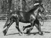 equestrian property to rent in cumbria