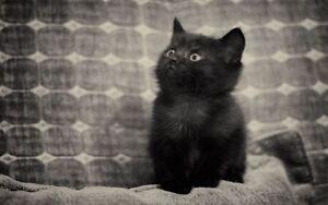 Looking for free male kitten.