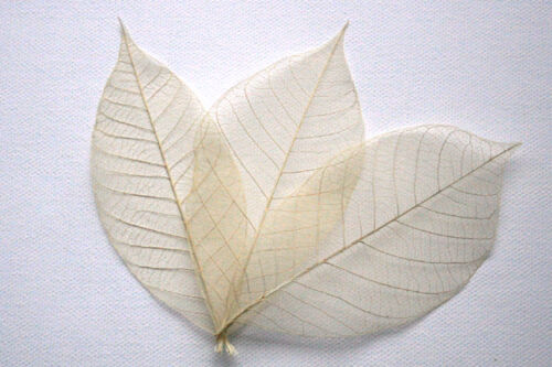 """Natural Skeleton Leaves for Crafts ~ 4"""" ~ 25 count ~ ASSORTED COLORS ~ NEW"""