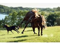 Exercise Rider/Groom Available