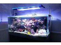 Fish Tank/Reef Tank & Cabinet - Marine Full Setup