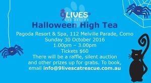 9 Lives Cat Rescue Halloween High Tea Duncraig Joondalup Area Preview