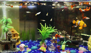 Baby guppy/guppies, thermometer, feeding ring and etc.