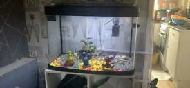 64 litre panorama fish tank with led light really nice gravel and toys